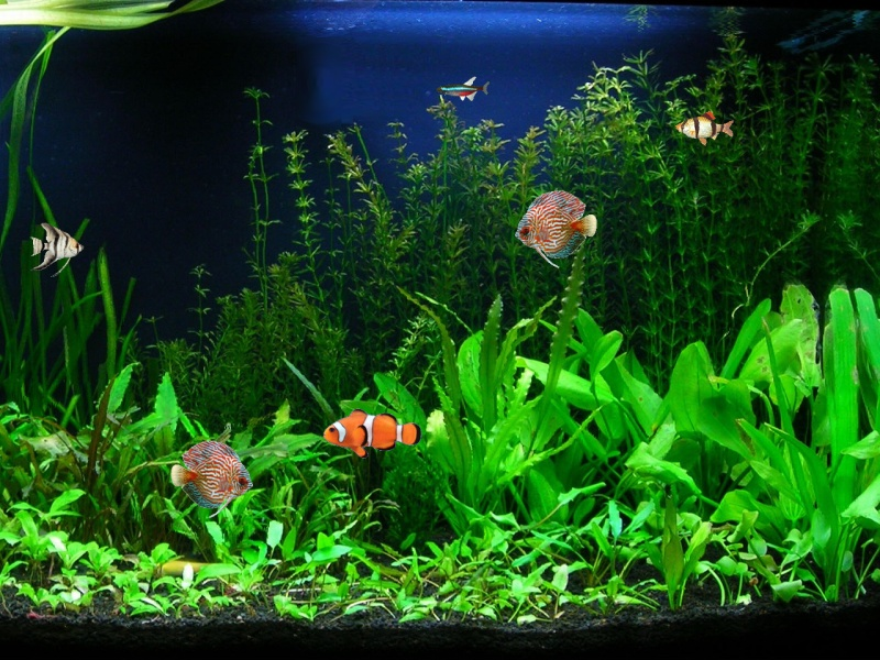 Annual ARVAS Aquarium Tropical Fish Show At Olean Library