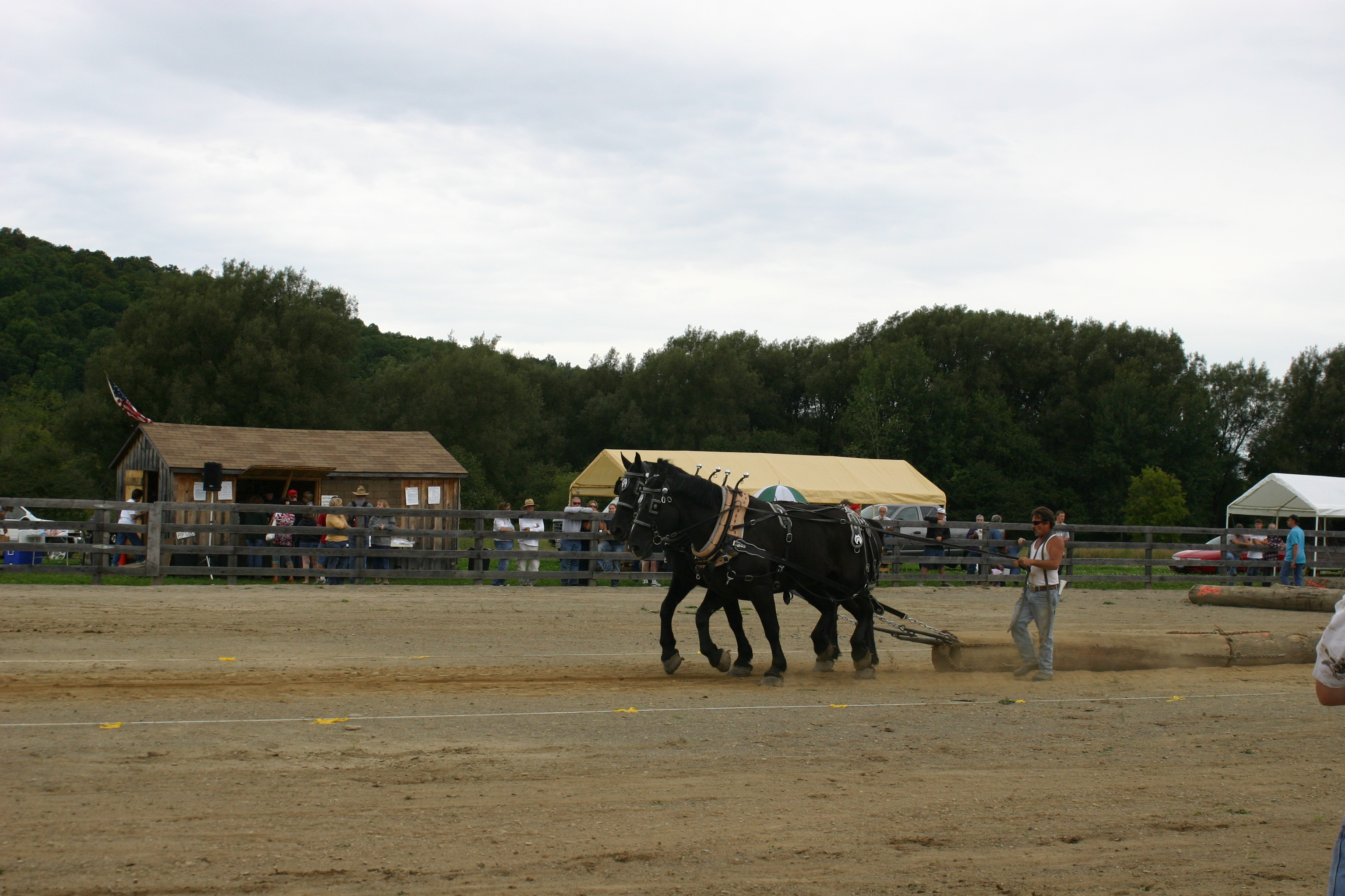 Creekside Roundup S 2012 Horse Pull Enchanted Mountains Of Cattaraugus County New York Naturally Yours