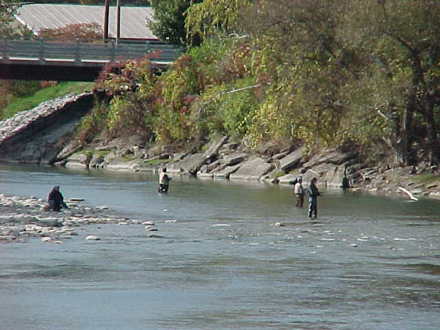 Fishermen enjoy Steelhead fishing in Cattaraugus Creek in Gowanda