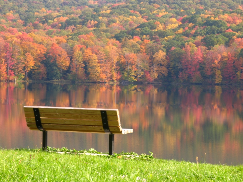 Picture of bench at Allegany State Park