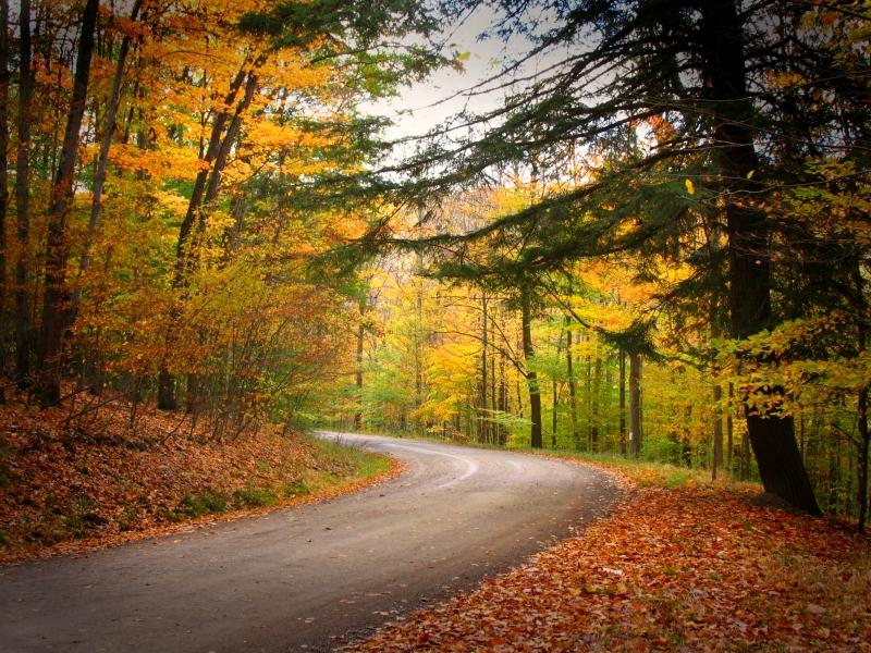 Allegany State Park Autumn photo by kuddlyteddybear2004 on Flickr