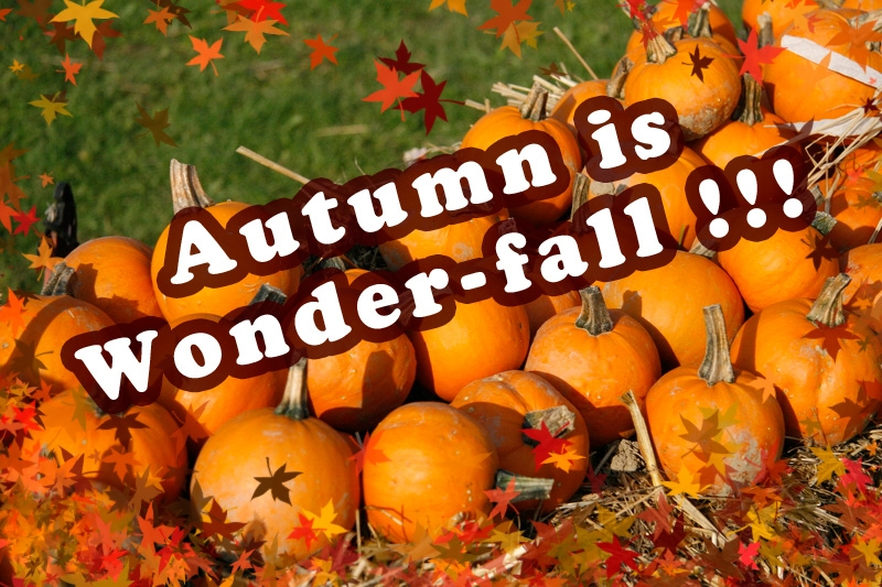 Autumn is Wonder-fall!!!