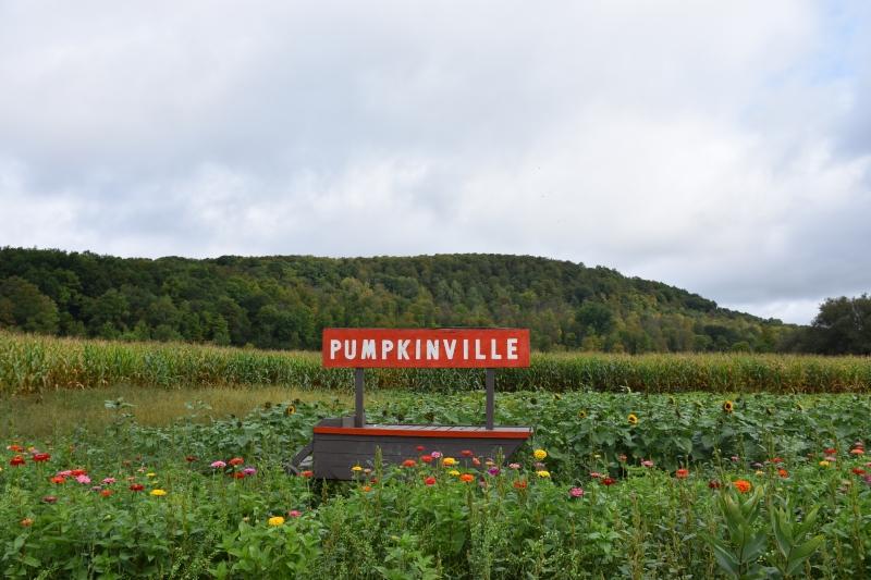 Fall Foliage of hill at Pumpkinville