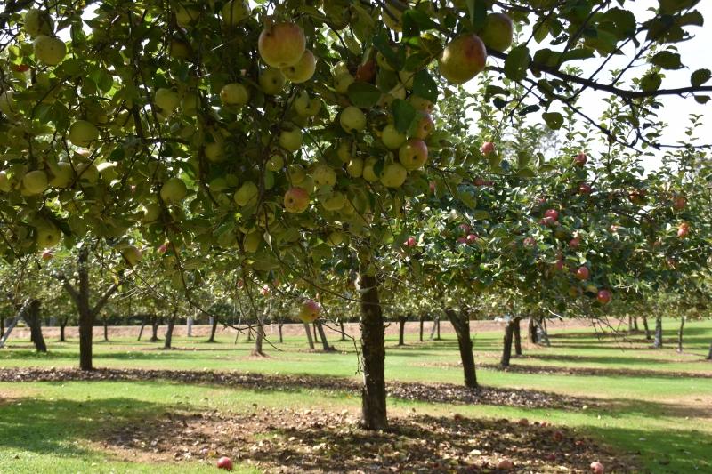 Cottage Orchard Apple Farm