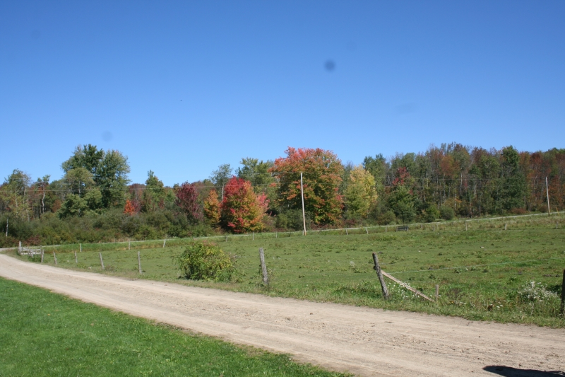 Picture of some trees along the Amish Trail