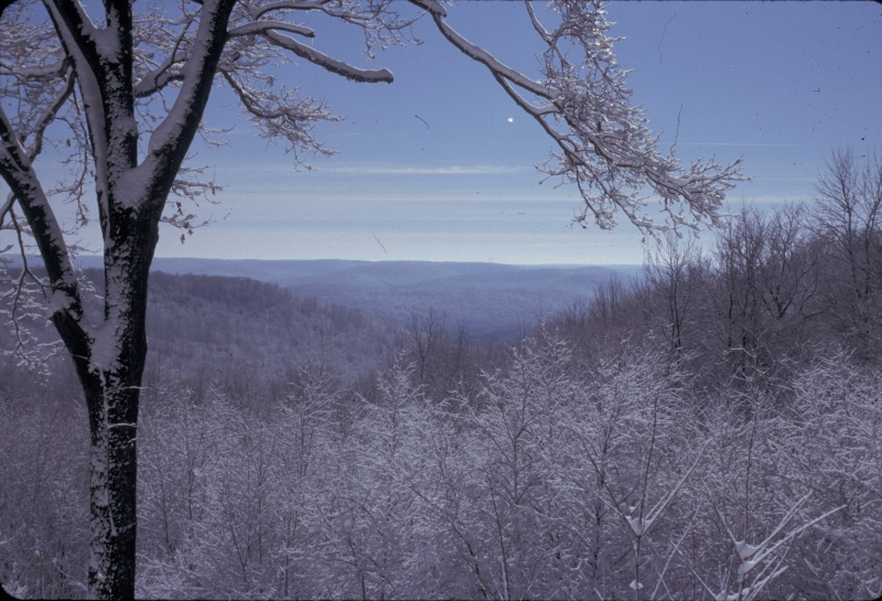 View from Allegany State Park