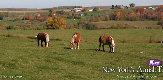 Preview of the Work Horses along the Amish Trail Wallpaper