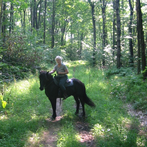 Alice and Horse on the trail at Allegany State Park
