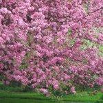 Image for wp-em-spring-1024x768.jpg