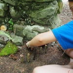 Fairy Houses and Toad Abodes at the Allegany Nature Pilgrimage