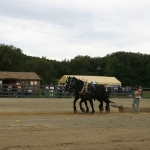 Draft Horses pulling logs at Creekside Roundup Arena