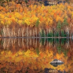 Example of Fall Photography