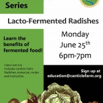 Lacto-Fermented Radishes at Canticle Farm