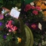Allegany Garden Festival 2018