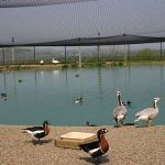 Gooseneck Hill Waterfowl Sanctuary opens for summer 2018