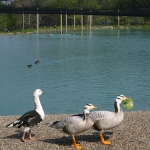 Wild Wing Festival at Gooseneck Hill Waterfowl Sanctuary