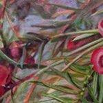 plant inspired art