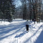 Cross Country Ski at Allegany State Park