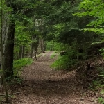 Trail at Lillibridge Property