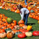 picking out pumpkin photo by Greg Spako