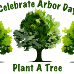 Arbor Day Buy a Tree From Forevergreens