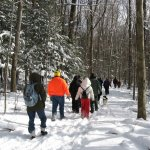 Winter hike through the woods