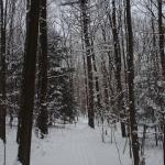 wintry hiking spot