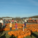 Selecting the perfect pumpkin at Pumpkinville