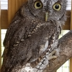 An Evening of Owls with Pfeiffer Nature Center