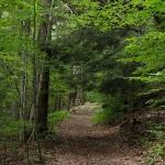 Trail at Lillibridge