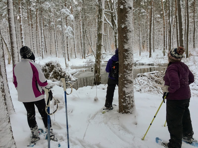 Allegany State Park Snowshoers