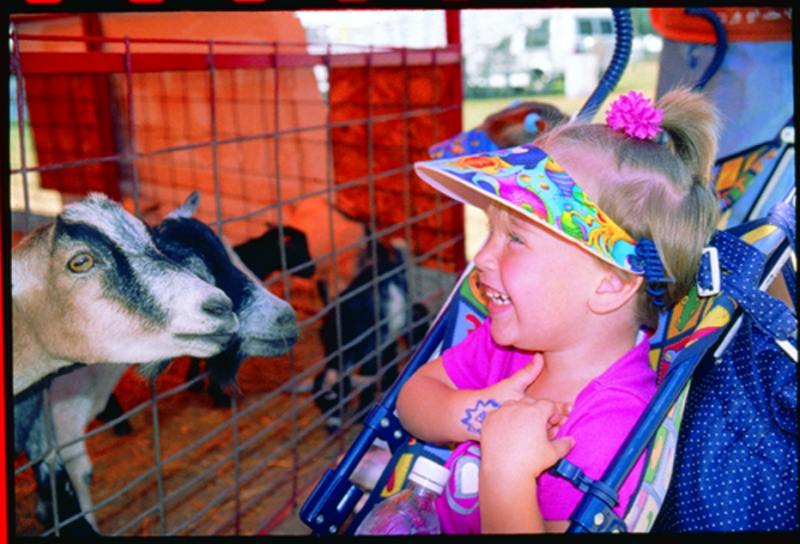 Checking out the goats at the Fair