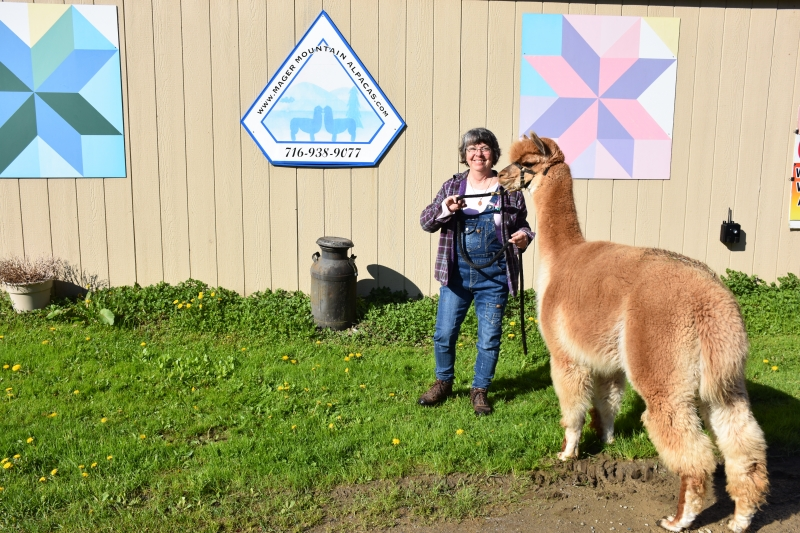 National Alpaca Farm Days in Cattaraugus County 2019