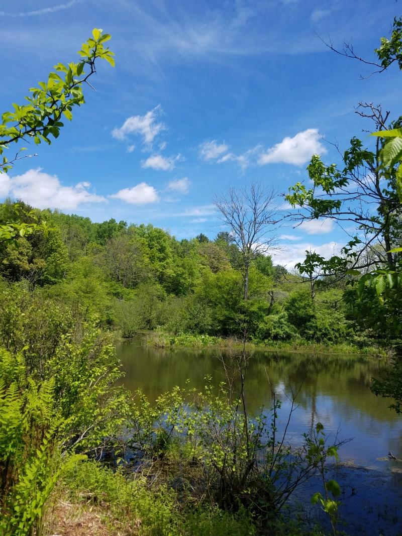 Eshelman Pond