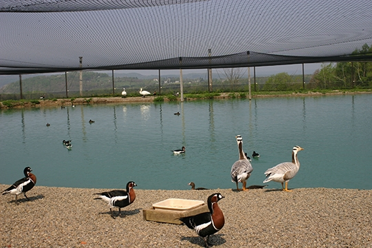 Gooseneck Hill Waterfowl Sanctuary Aviary 2