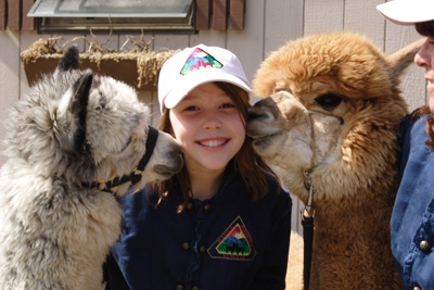Meet the Magers alpacas