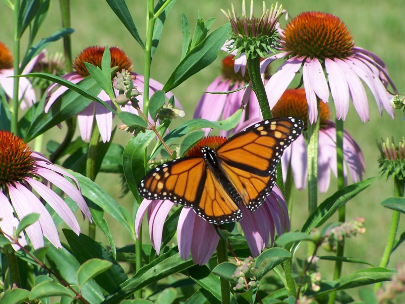 The importance of Native Plants for Future Sustainability