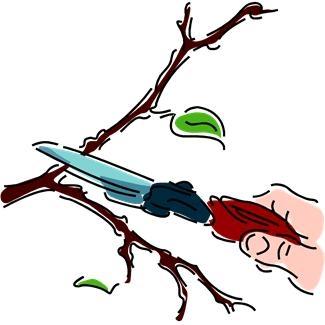 pruning clip art