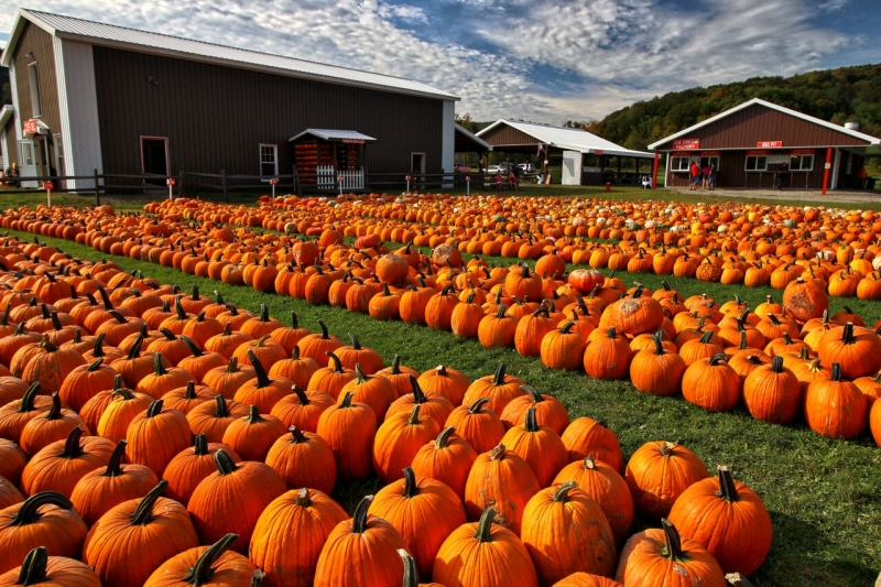 Pumpkinville Photo by Greg Spako