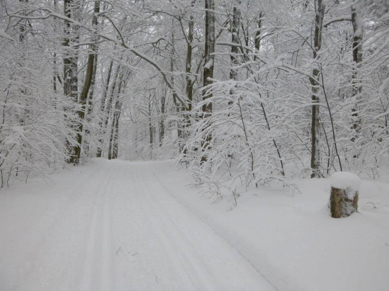Art Roscoe Trail System