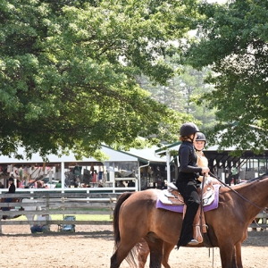 Horses exercising at the 2019 Catt. County Fair