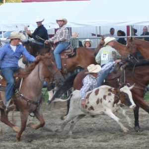 Steer Wrestling at the Ellicottville Rodeo