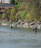Fishermen Fishing in Gowanda