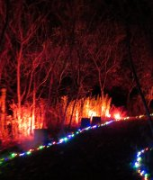 Night Lights at Griffis Sculpture Park