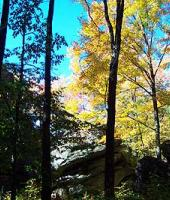 The blue sky set against the colorful leafs make for great views.