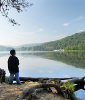 Summer at Allegany State Park