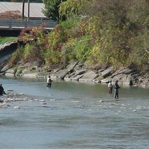 Fishermen enjoy Steelhead fishing in Cattaraugus Creek in Gowanda