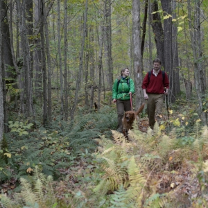 3rd Saturday October 2019 Hike in Allegany State Park