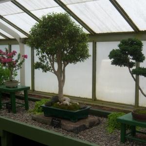 Bonsai Class at Pfeiffer Nature Center