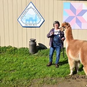 National Alpaca Farm Days in Cattaraugus County 2019